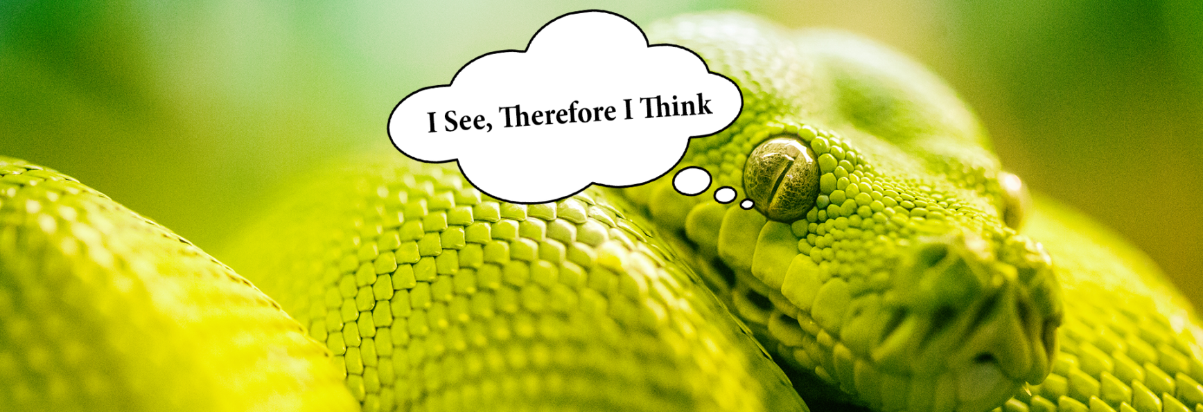 A snake with a thought bubble, saying 'i see, therefore i think'